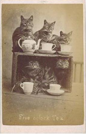 """Brighton-based Harry Pointer may have had a cult following in the 1880s with his famous cat postcards, but the reach of these early photographs was miniscule, compared with a LOL Cat image that goes viral today. Image via <a href=""""http://www.photohistory-sussex.co.uk/BTNPointerCats.htm"""">Photo History of Sussex</a>"""
