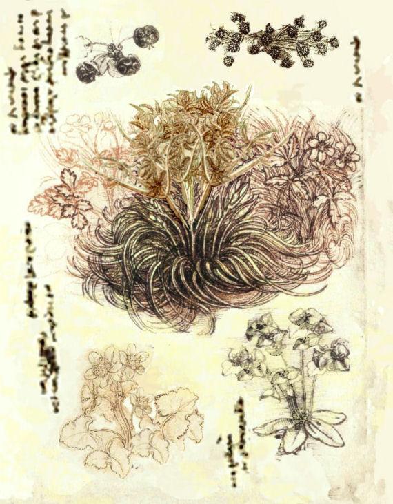 Crucible: Truug Botanical Sketch