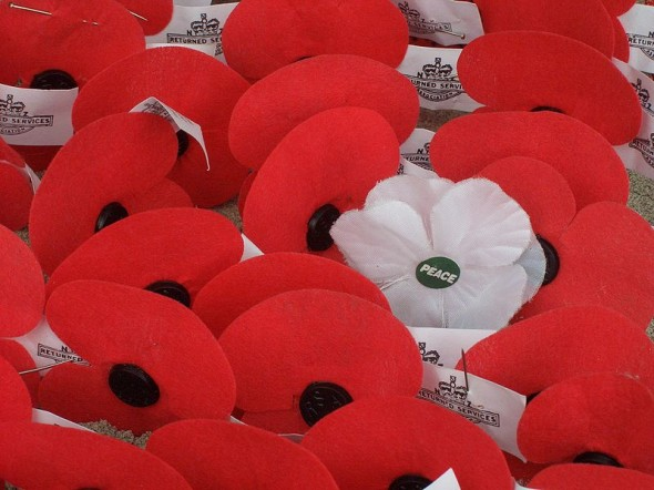 Red and White Remembrance Day Poppies