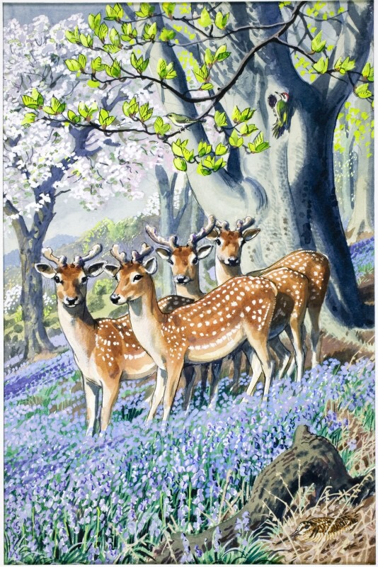 "An image from ""What to Look For in Spring"" by C.F. Tunnicliffe R.A. © Ladybird Books Ltd, 1961 Reproduced by permission of Ladybird Books Ltd."