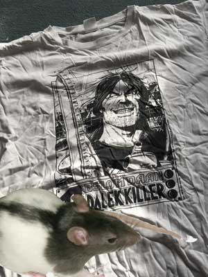 Yes, it's true, a Giant Rat this big ate my Abslom Daak T-Shirt. Honest