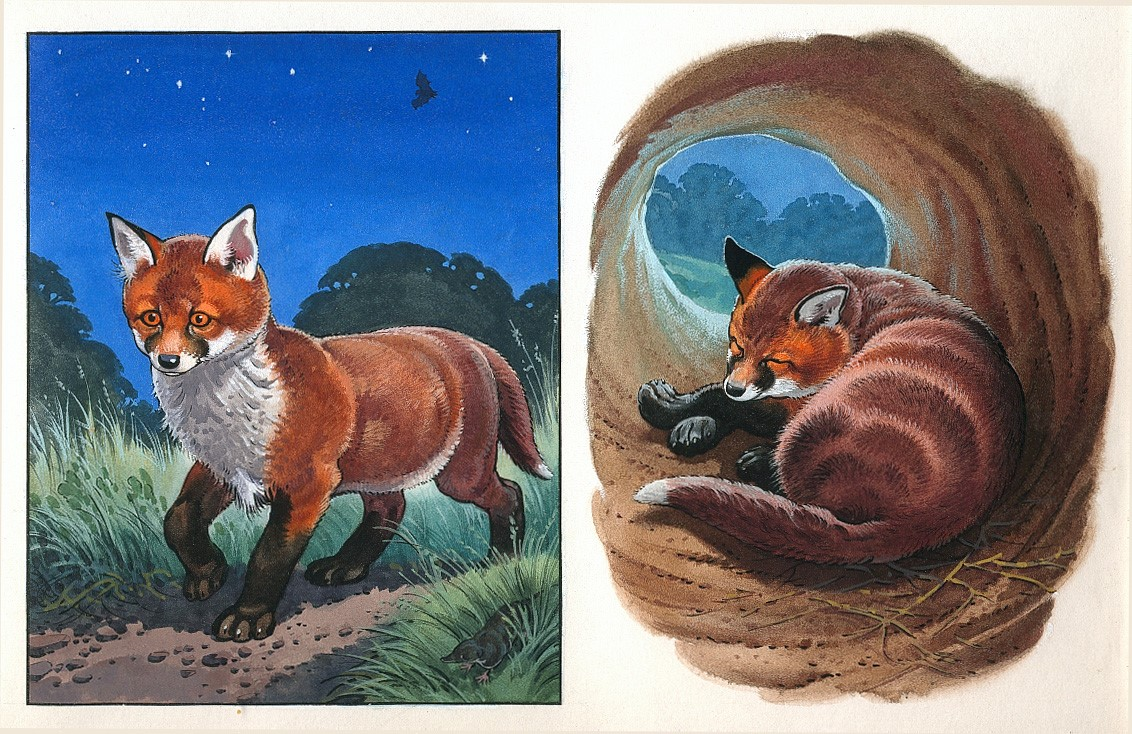 Art for the Marney the Fox stories for Sunny magazine published in the 1980s, artist unknown