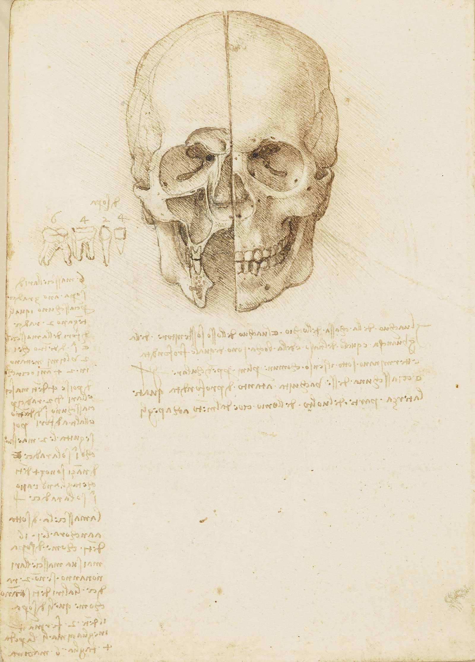 The skull sectioned, 1489, traces of black chalk, pen and ink by Leonardo da Vinci, to be displayed at Ulster Museum, Belfast