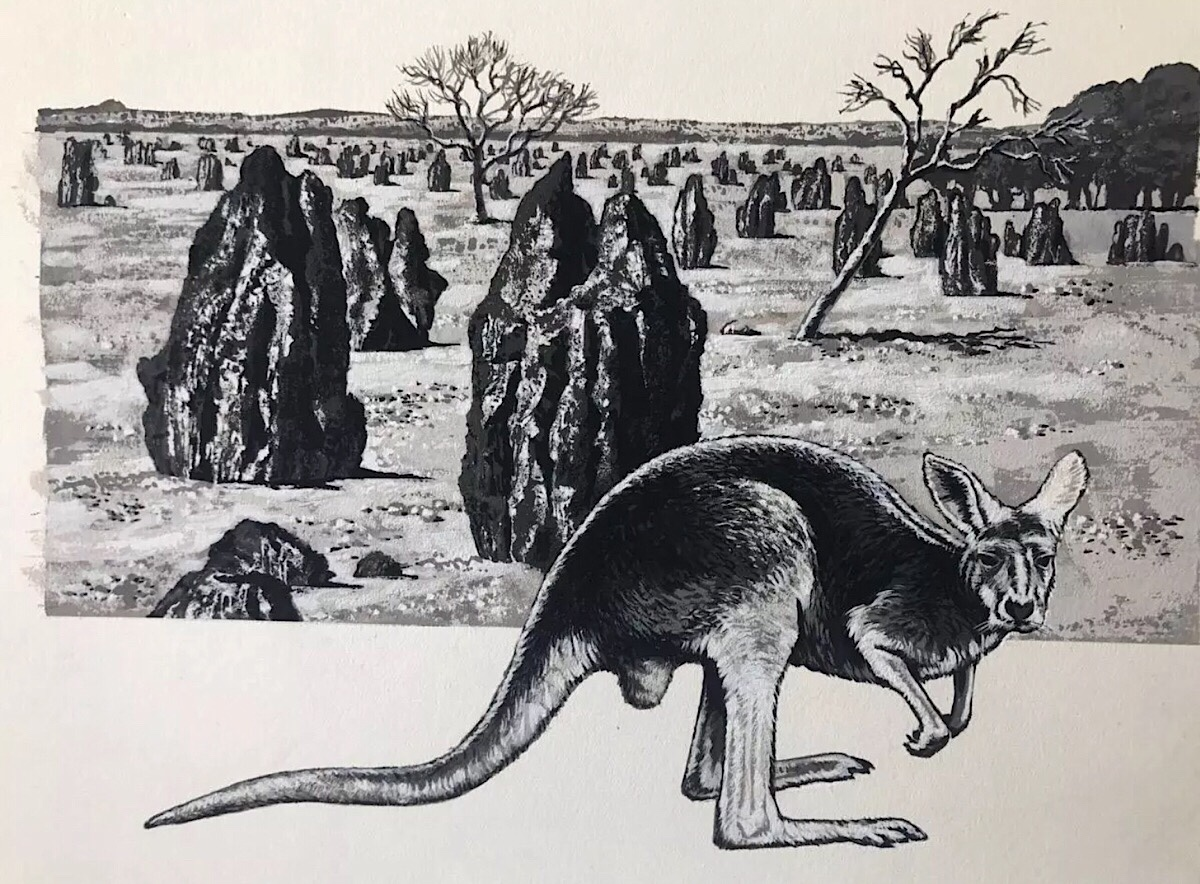 Kangaroo Illustration - Look and Learn (1970s)